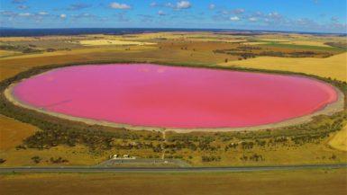Pink Lake in Australien