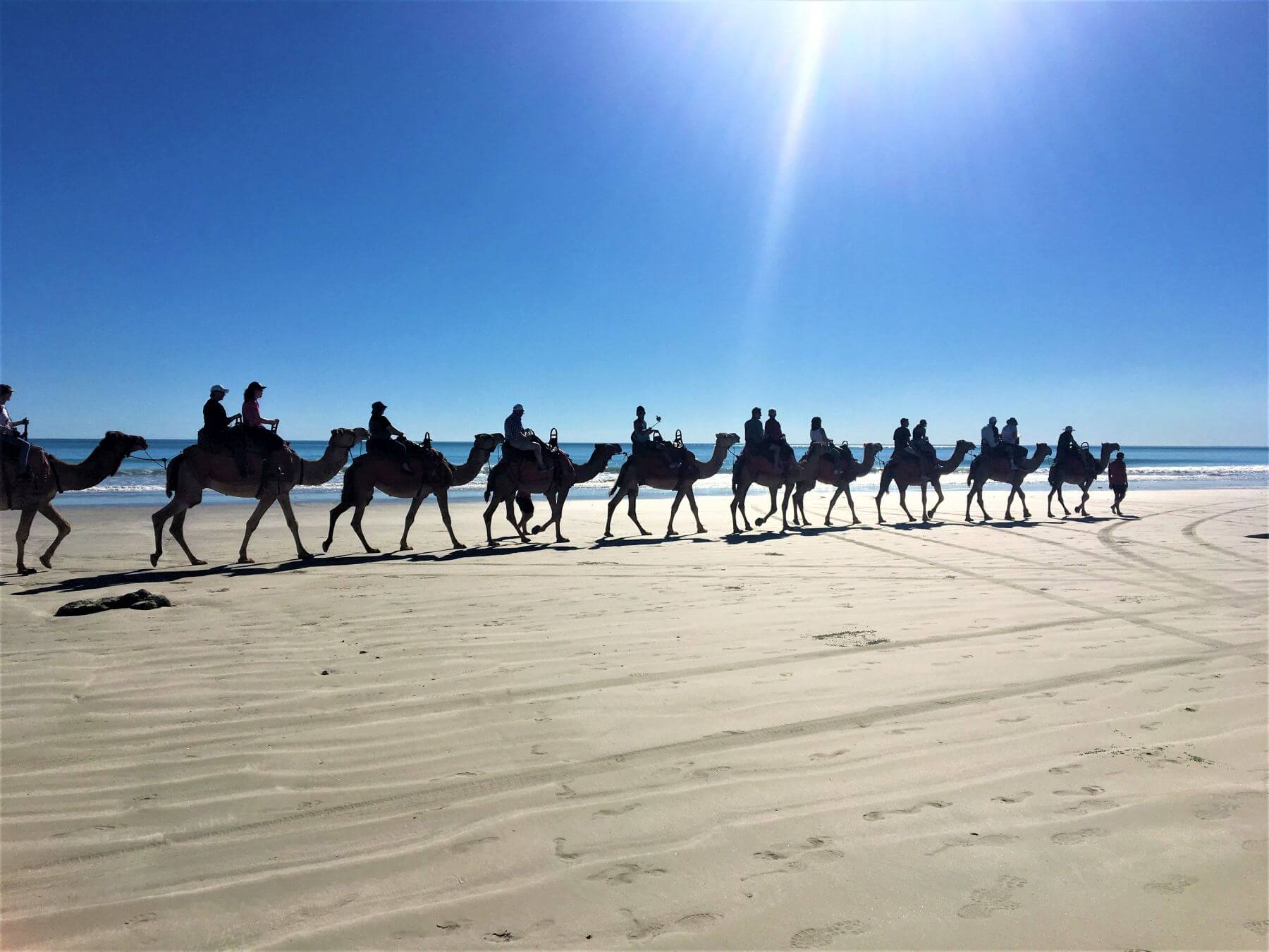 Kamele am Cable Beach in Broome