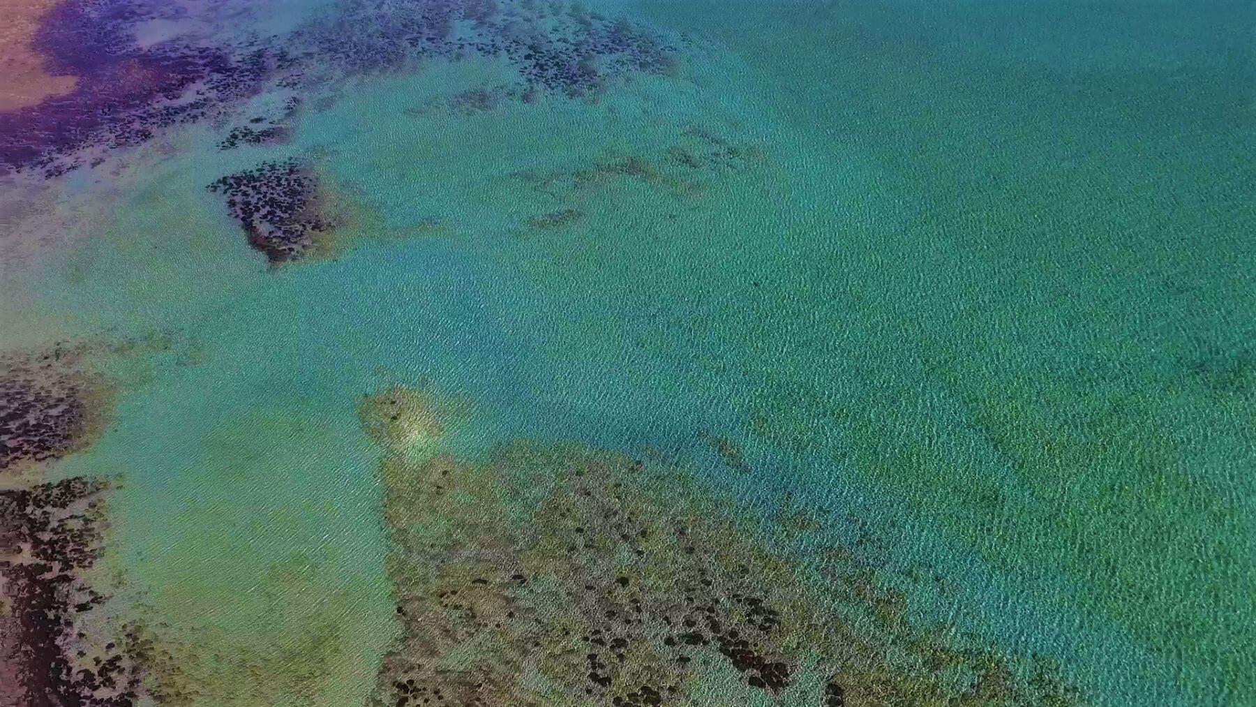 Shark Bay Highlight - Stromatolites in Australien