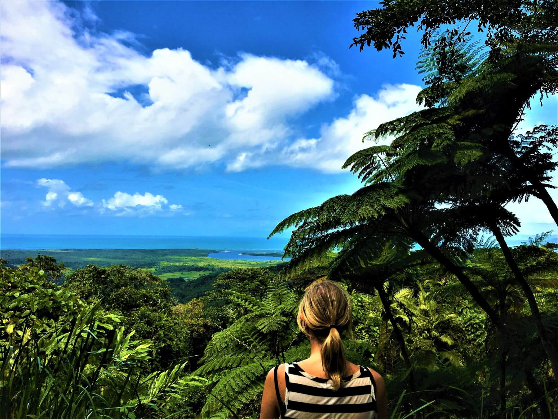 Blick auf den Daintree National Park in Australien
