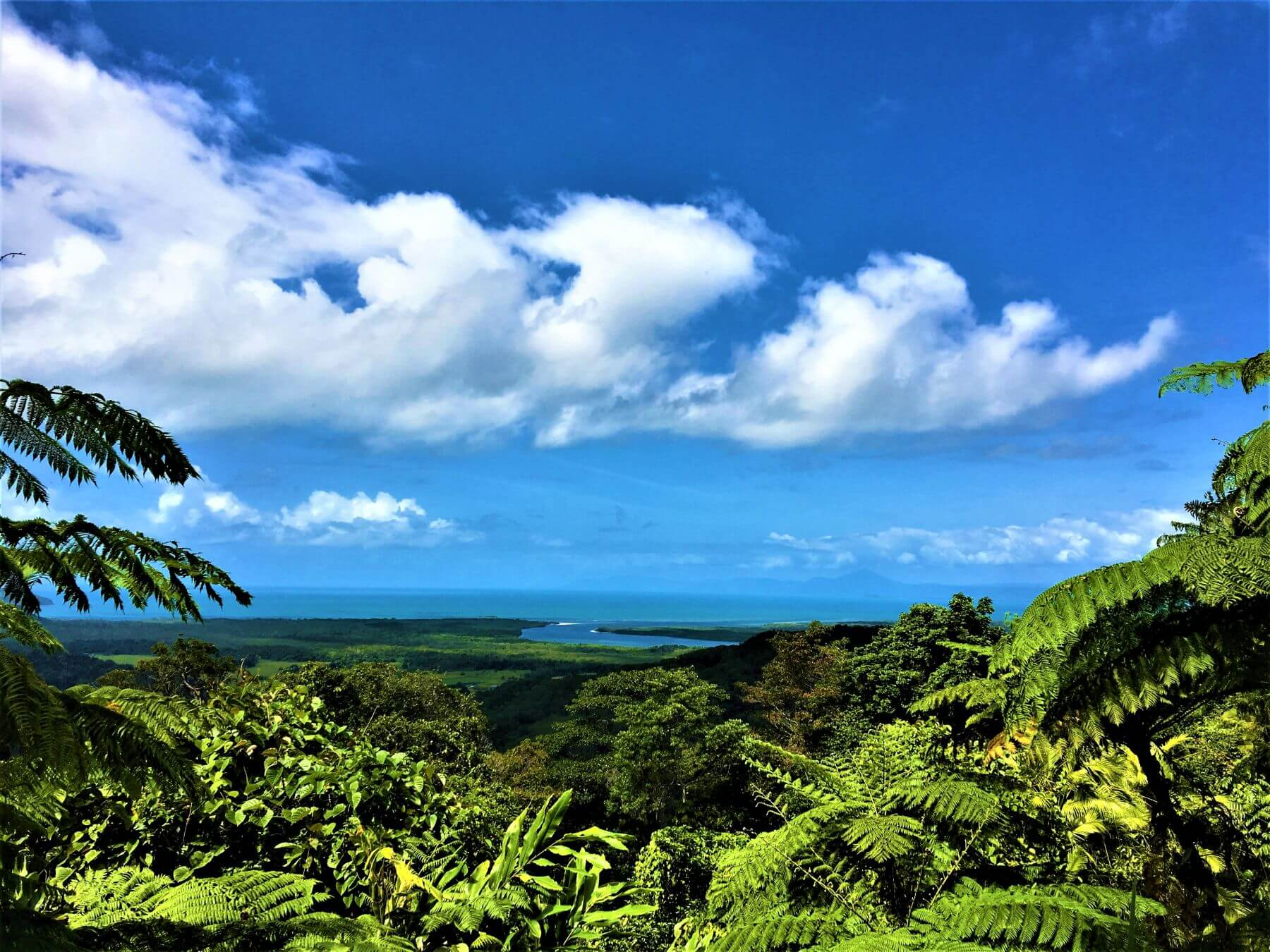 Daintree Nationalpark in Australien