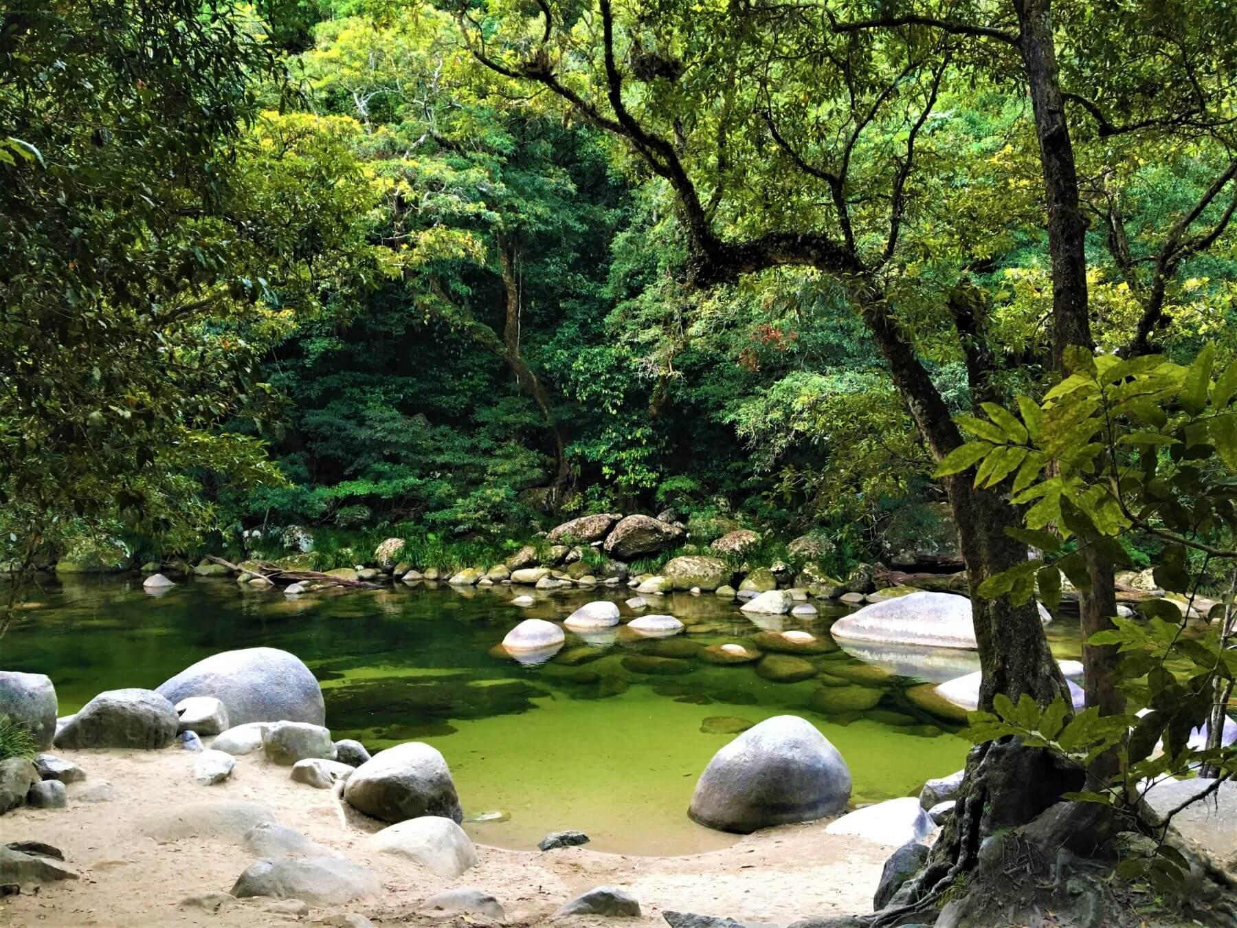 Daintree Regenwald in Australien - Mossman Gorge