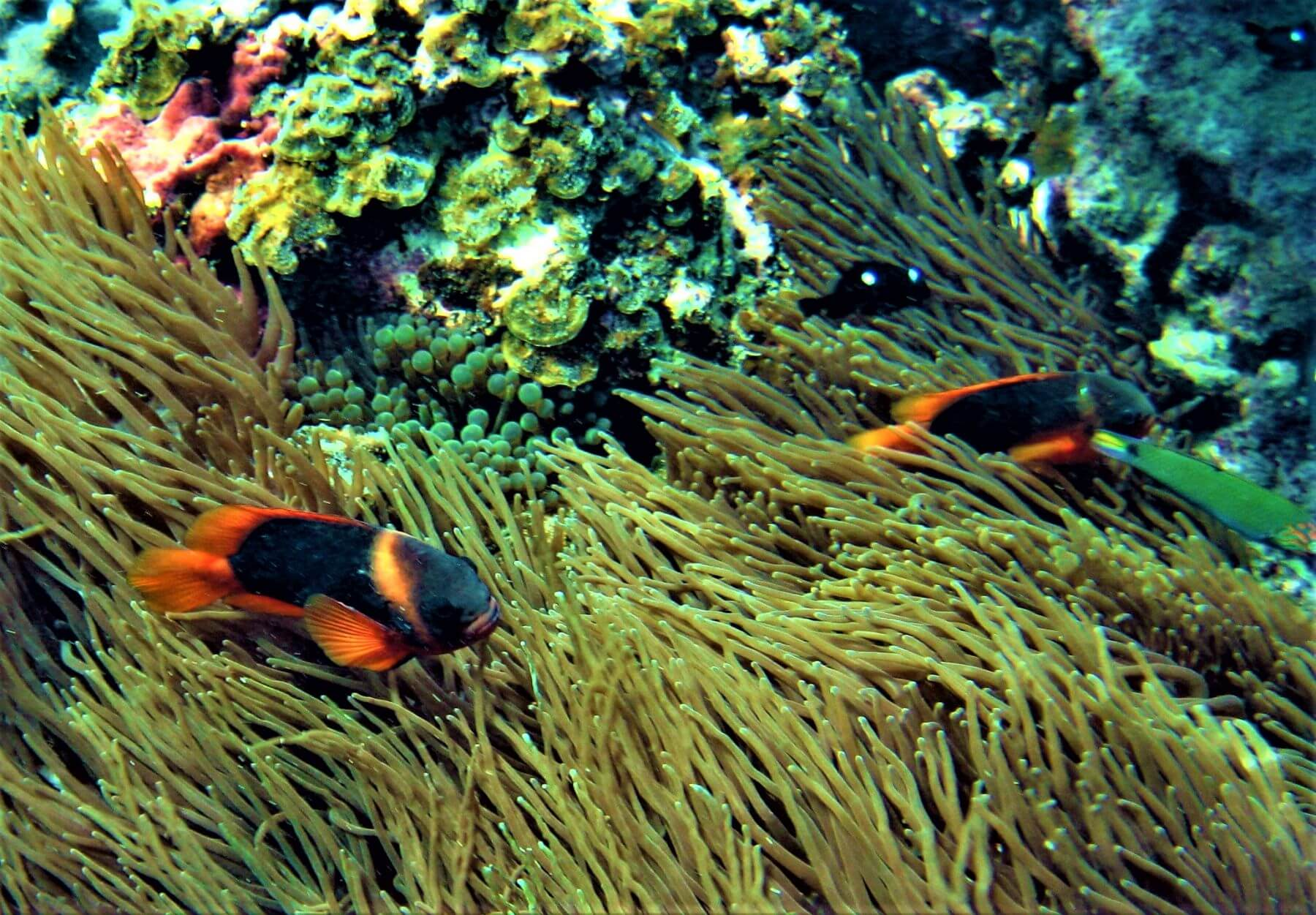 Bunte Fische am Great Barrier Reef in Cairns