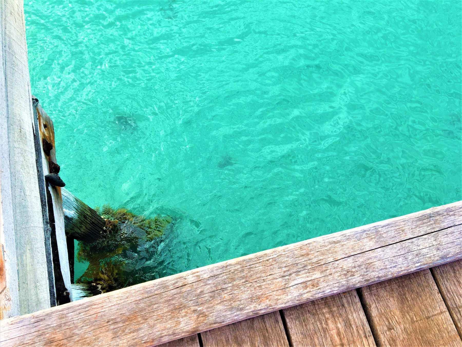 Känguru Island - Vivonne Bay