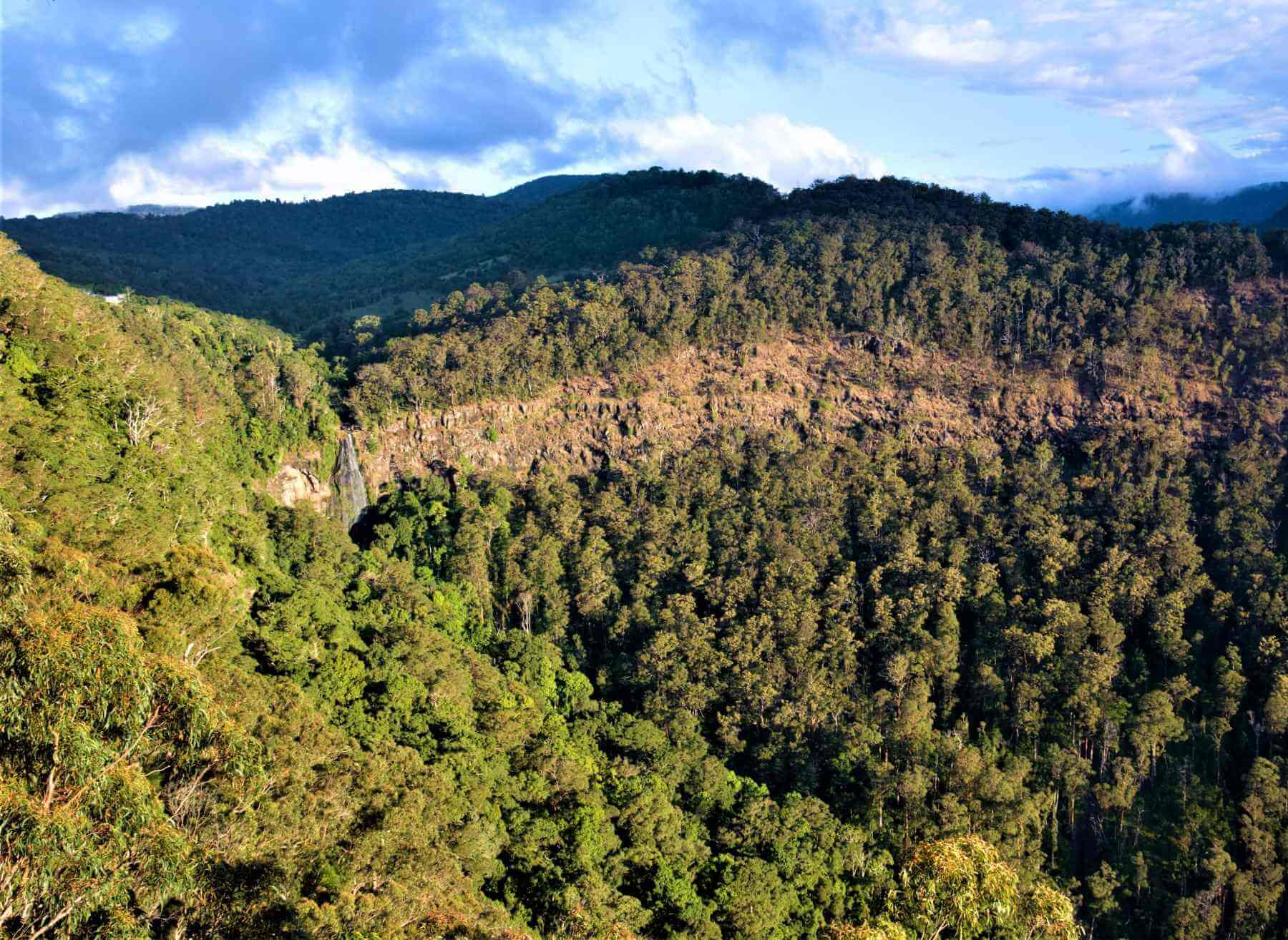 Blick auf den Lamington National Park in Australien