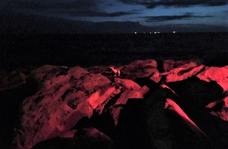 Pinguine in St-Kila bei Nacht