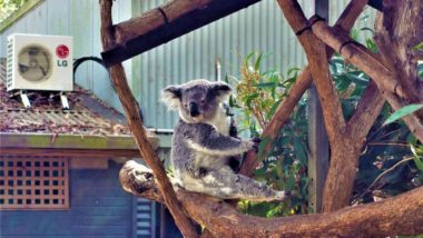 Port Macquarie - Koala Hospital