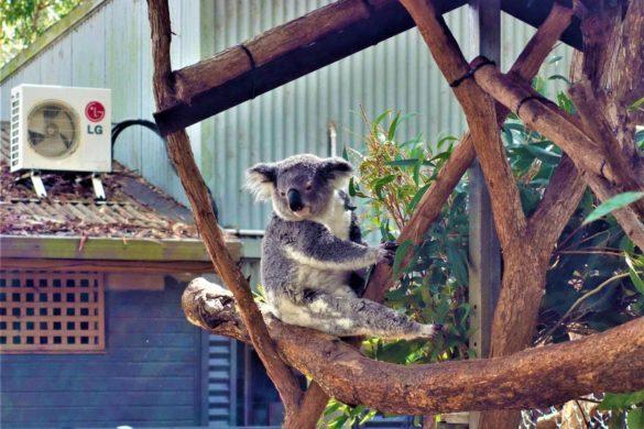 Port Macquarie - Koala Hospital