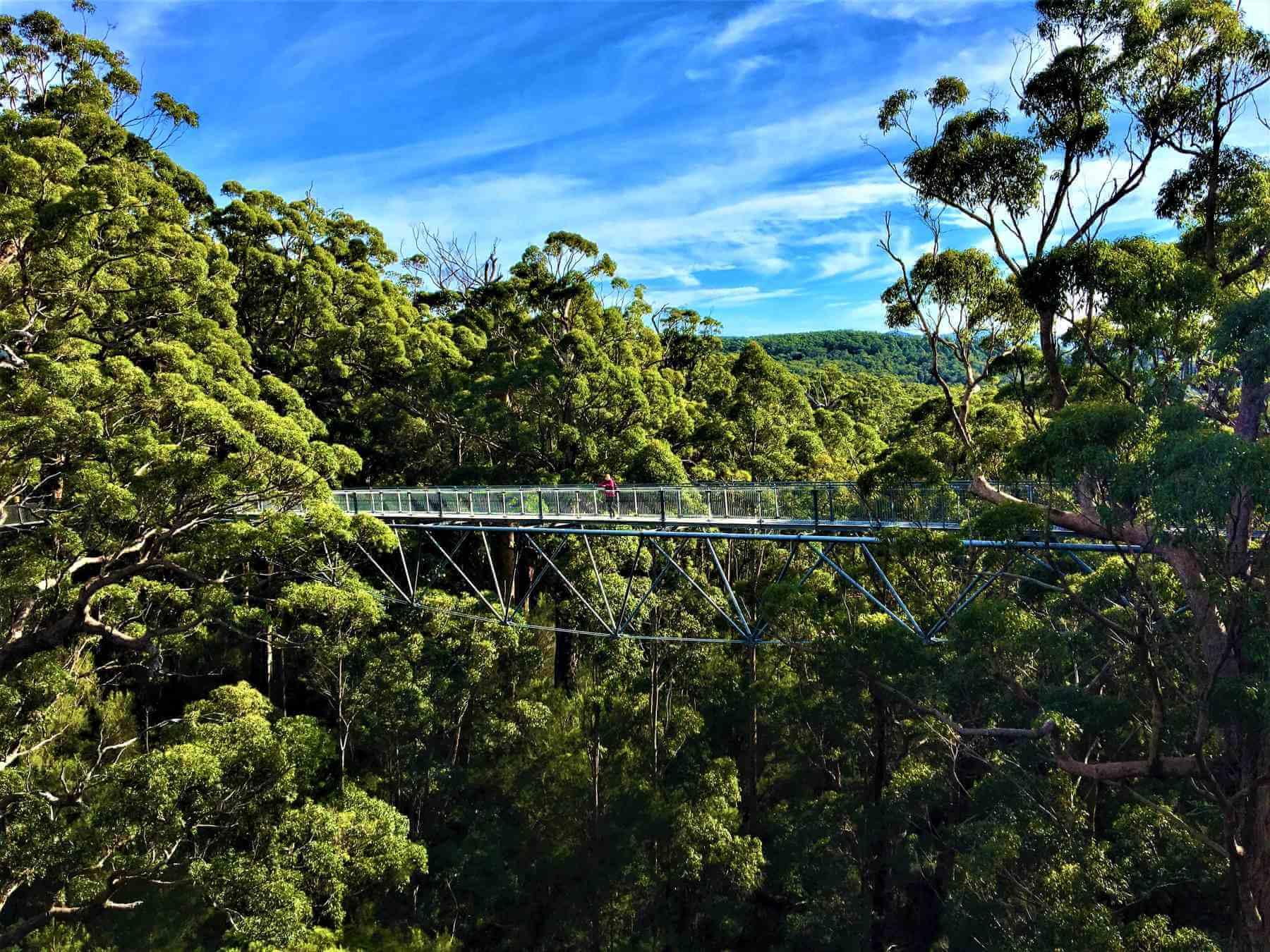 Tree Top Walk in Australien