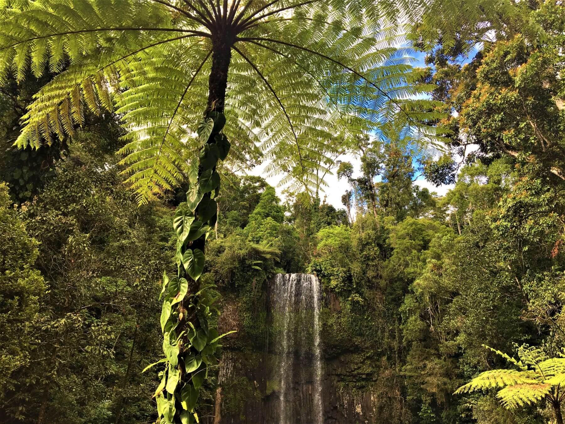 Wasserfall Millaa Millaa Falls in den Atherton Tablelands