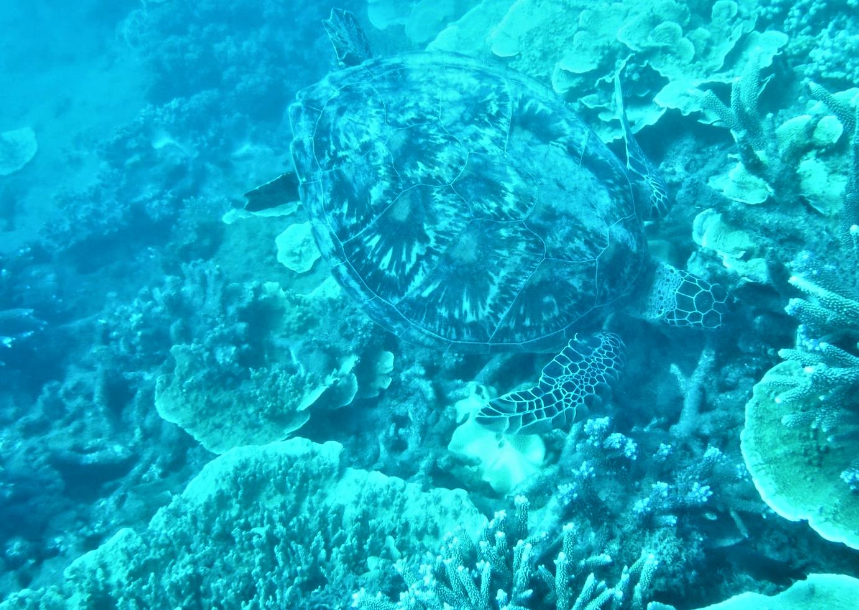 Australien - Great Barrier Reef